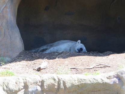 Snoozin' Polar Bear